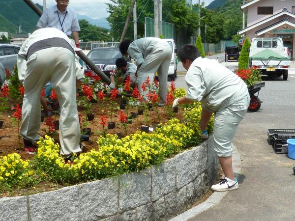 23-6-13花植え1